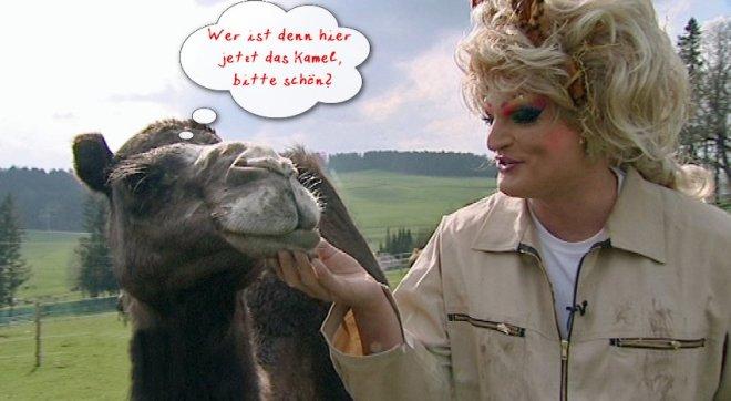 Kamel mit Olivia Jones (rechts)